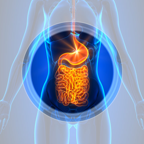 image of a womans body highlighting the gut