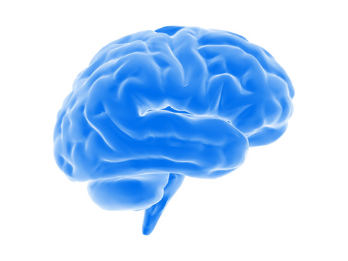 image of a blue brain