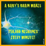 A Baby's Brain Makes 250,000 Neurones Every Minute!