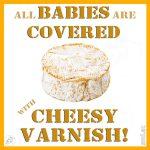 All Babies Are Covered with Cheesy Varnish!