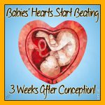 Babies' Hearts Start Beating 3 Weeks After Conception!