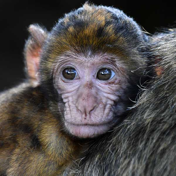 image of a baby monkey