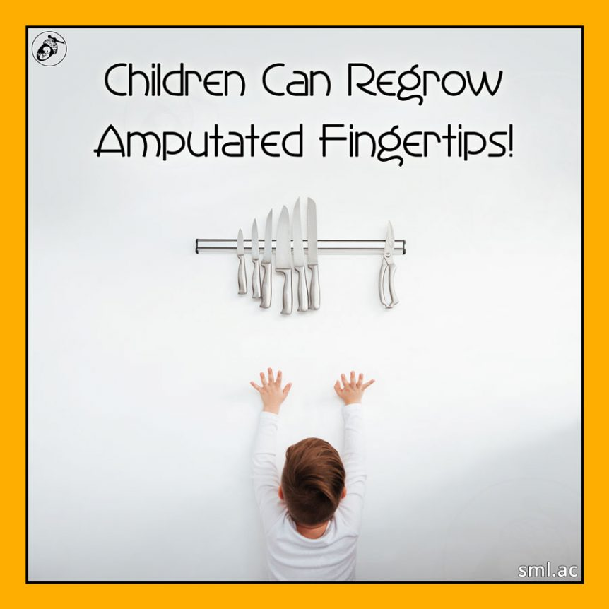 Children Can Regrow Amputated Fingertips!