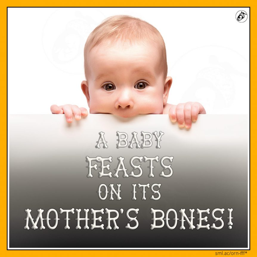 A Baby Feasts on Its Mother's Bones!