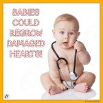 Babies Could Regrow Damaged Hearts!
